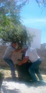 paros_gardening